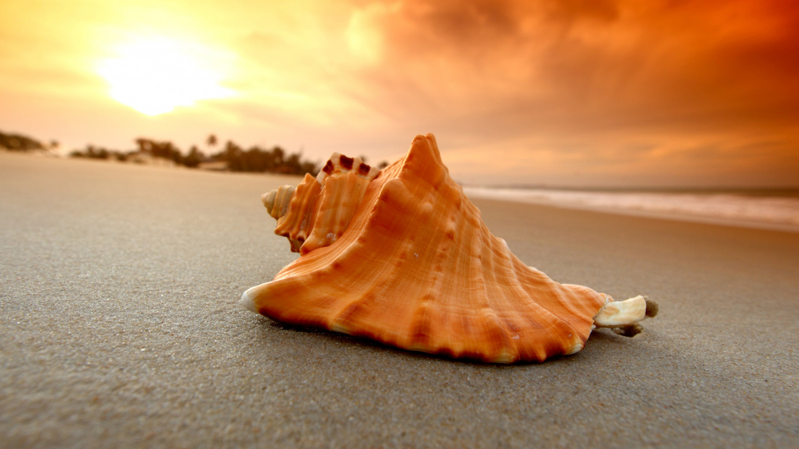 ракушка shell  № 248825 бесплатно