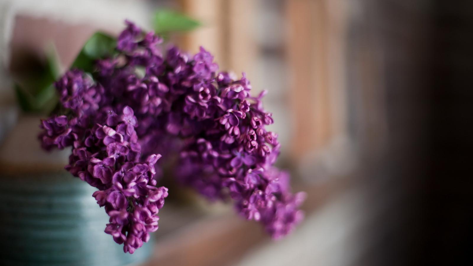 природа цветы ваза сирень  № 3063907 бесплатно