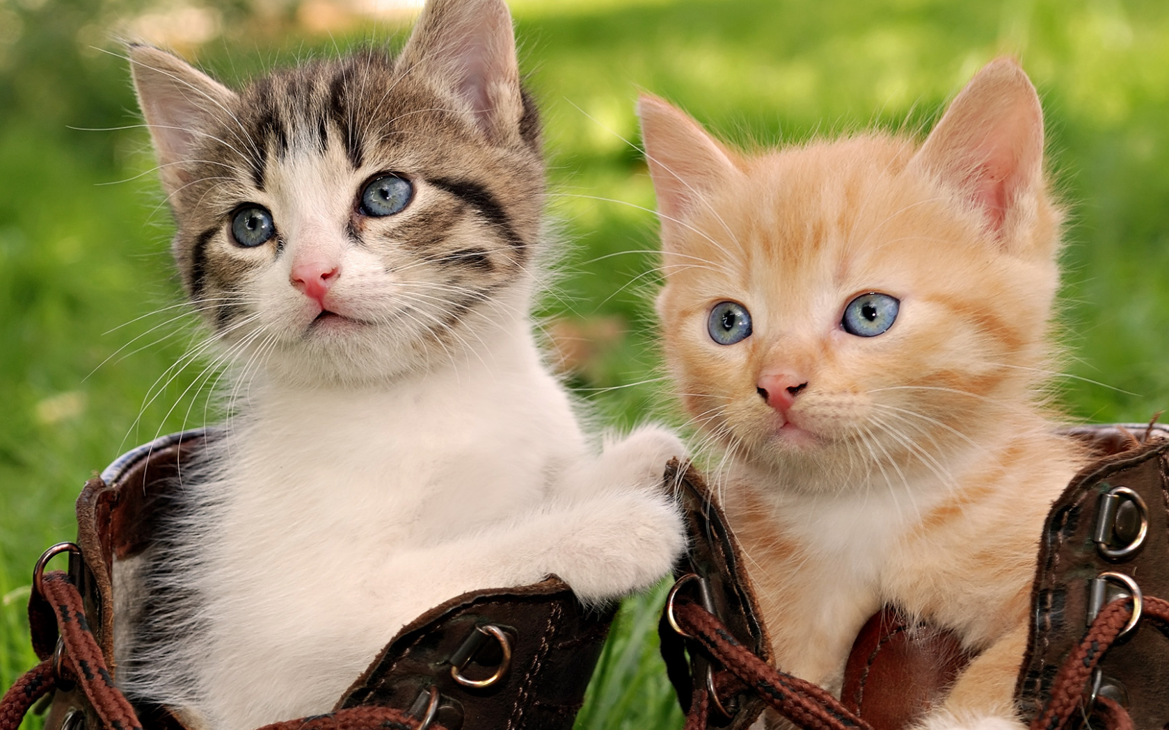 how much does neutering a cat cost in canada