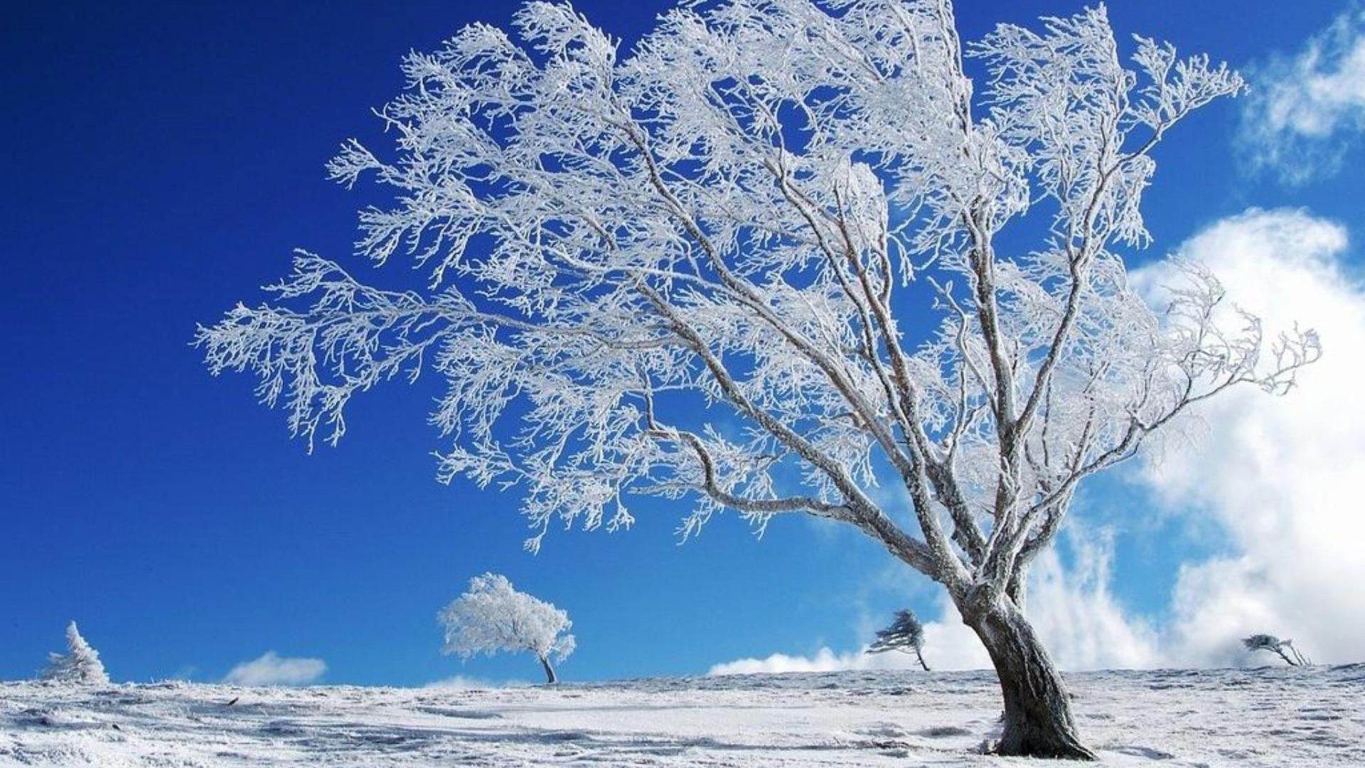 Деревья в инее  № 1191600  скачать