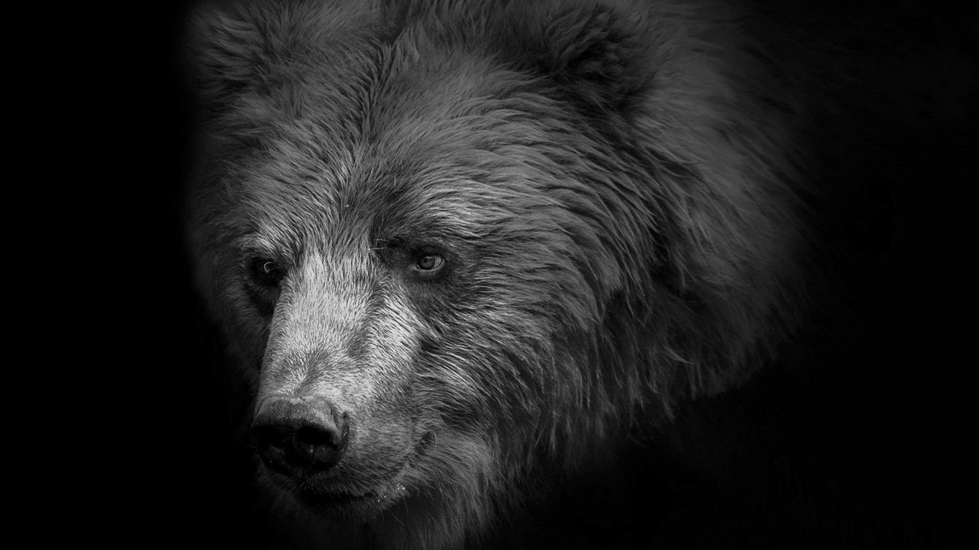Черны медведь  № 3207586 бесплатно
