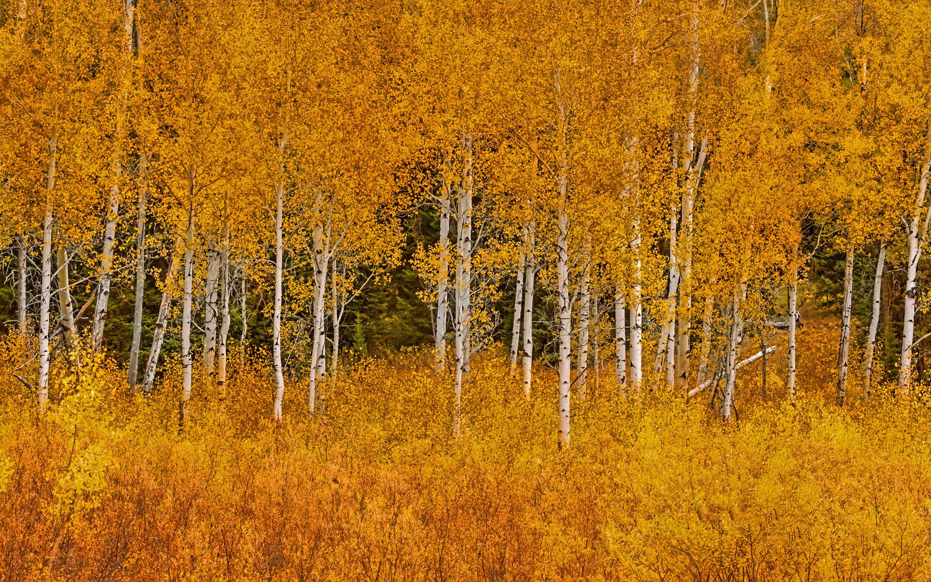 деревья парк осень роща  № 3186074 без смс