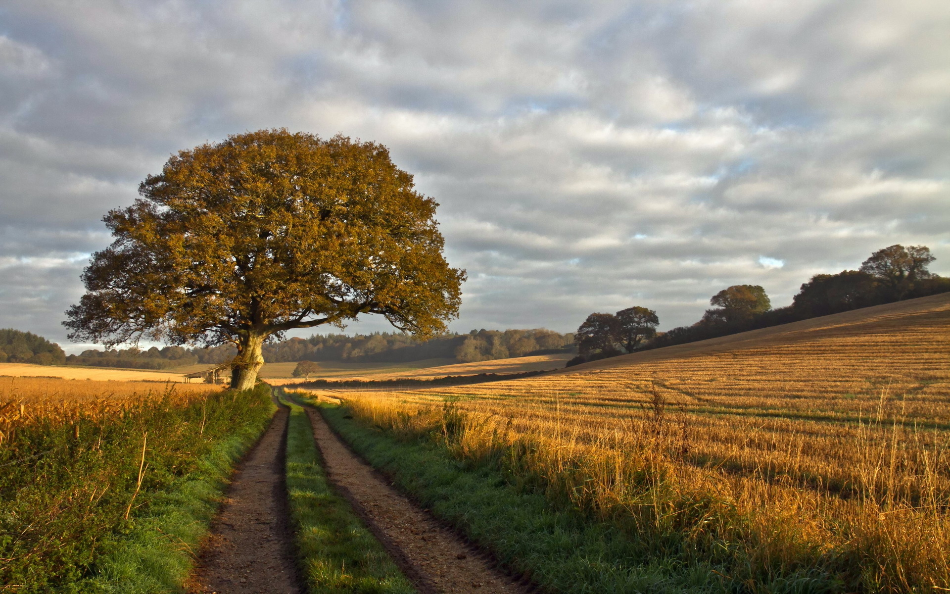 дерево дорога tree road  № 2404818 без смс