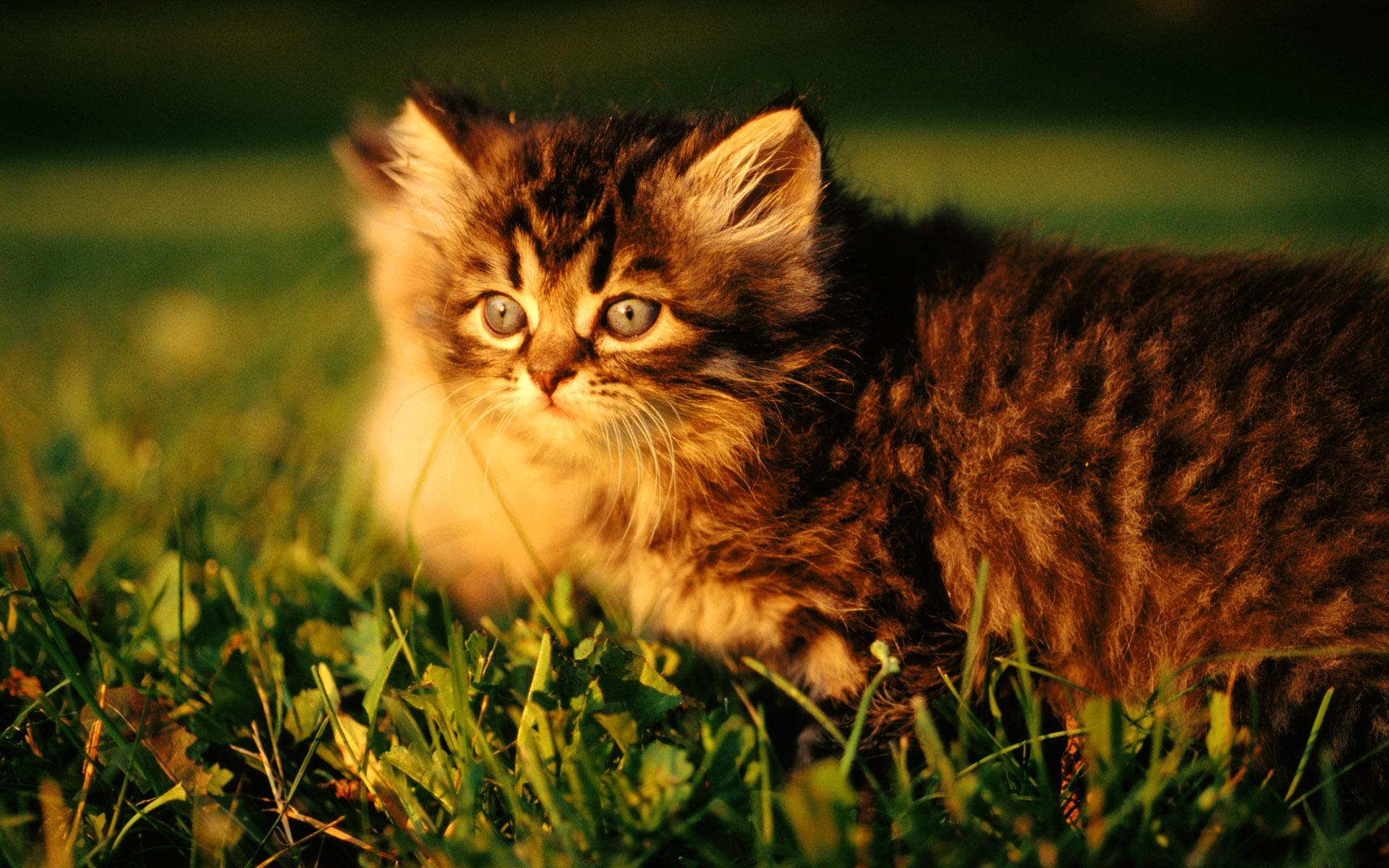 Котенок в мелкой траве  № 2953948 загрузить