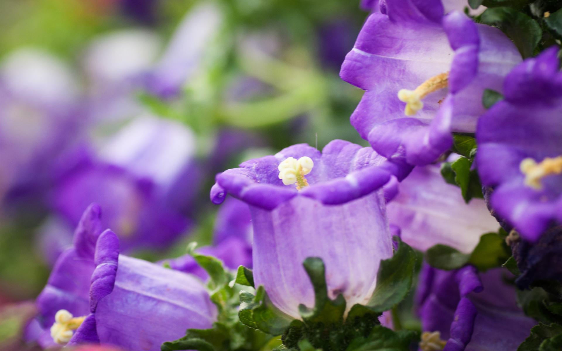 Фиолетовые макро обои фото картинки