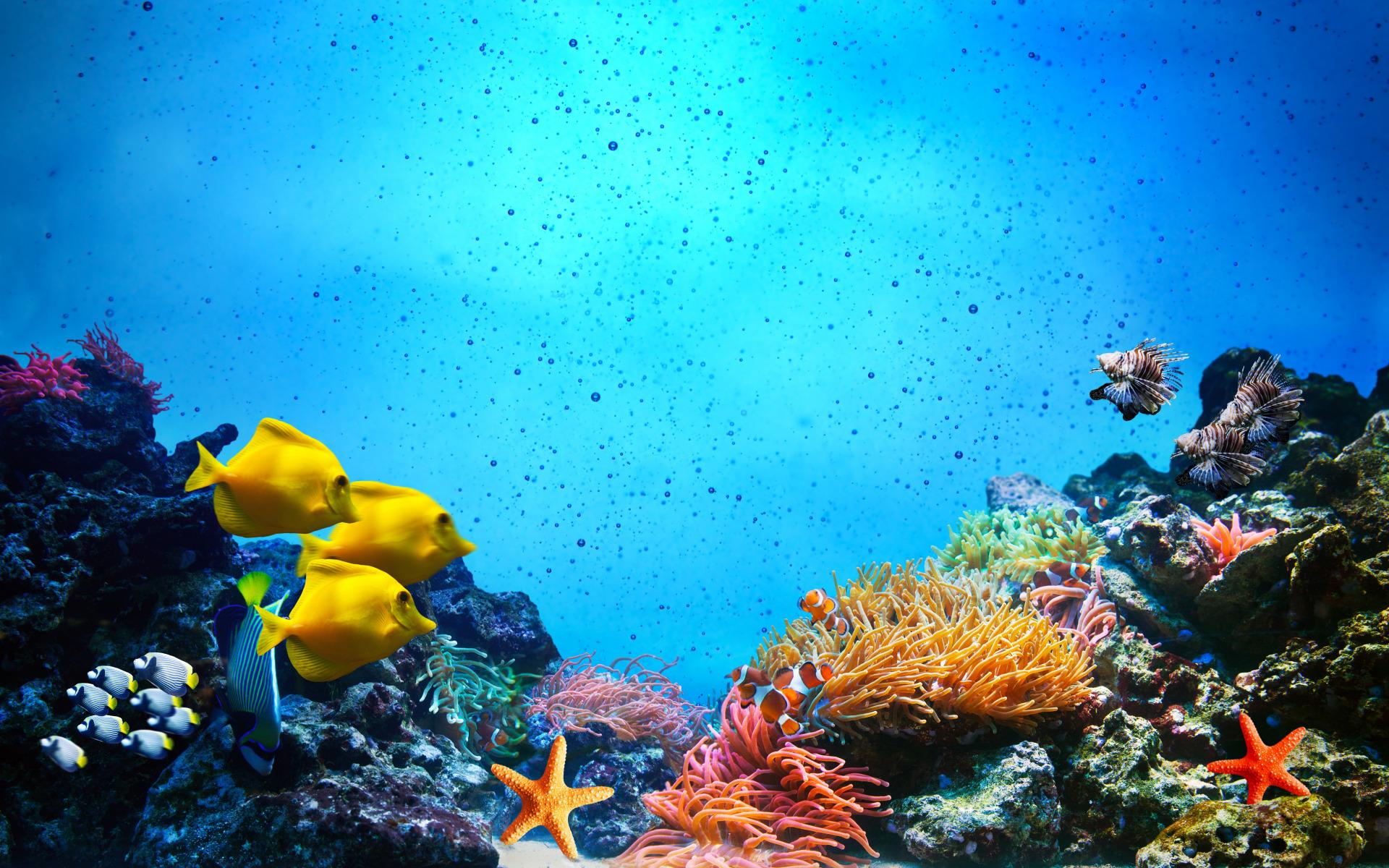 доступ функционалу картинки подводный мир океана понравился рисунок