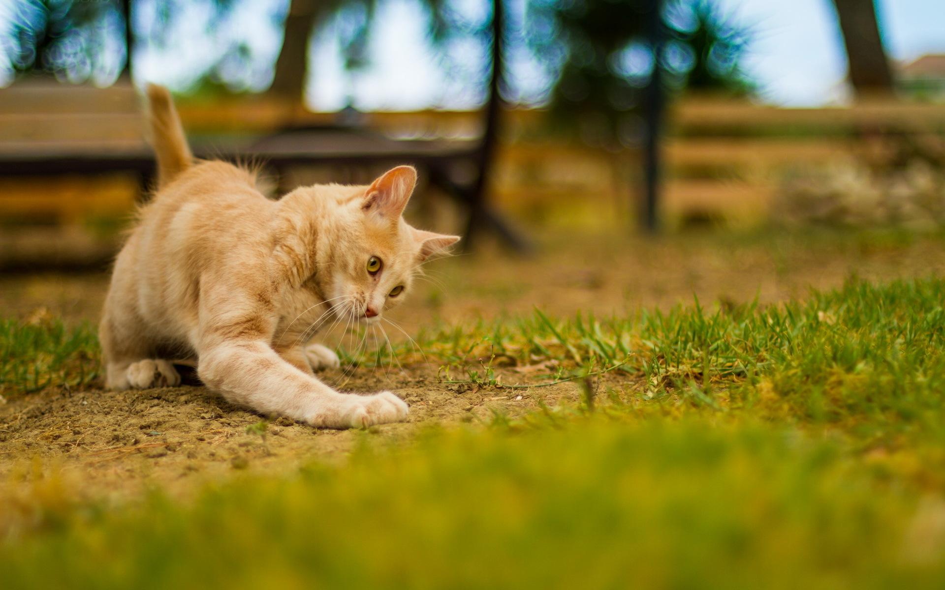 Котенок играющий с кошкой в траве  № 1994952 бесплатно