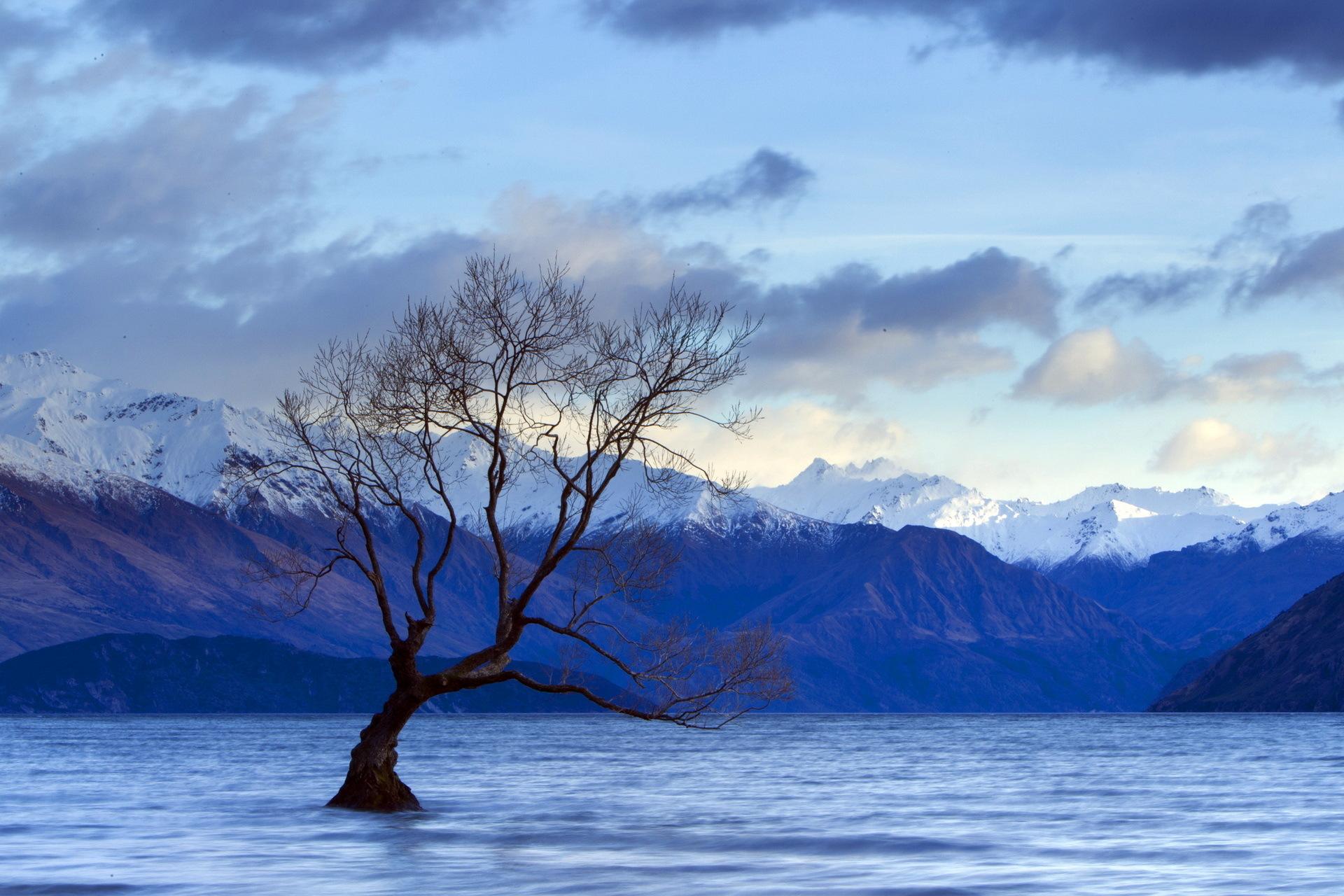 деревья небо озеро  № 3165805  скачать