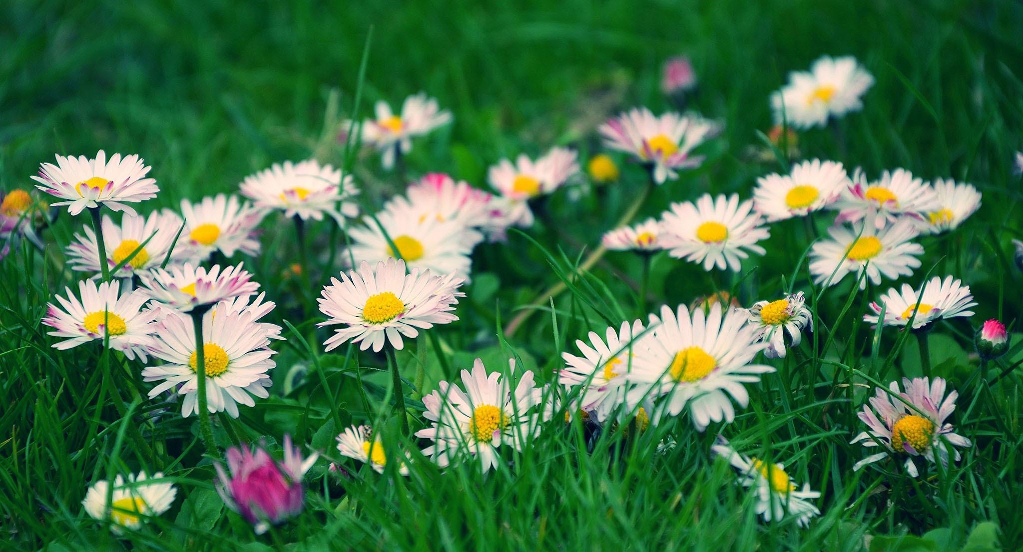 Обои на раб стол полевые цветы
