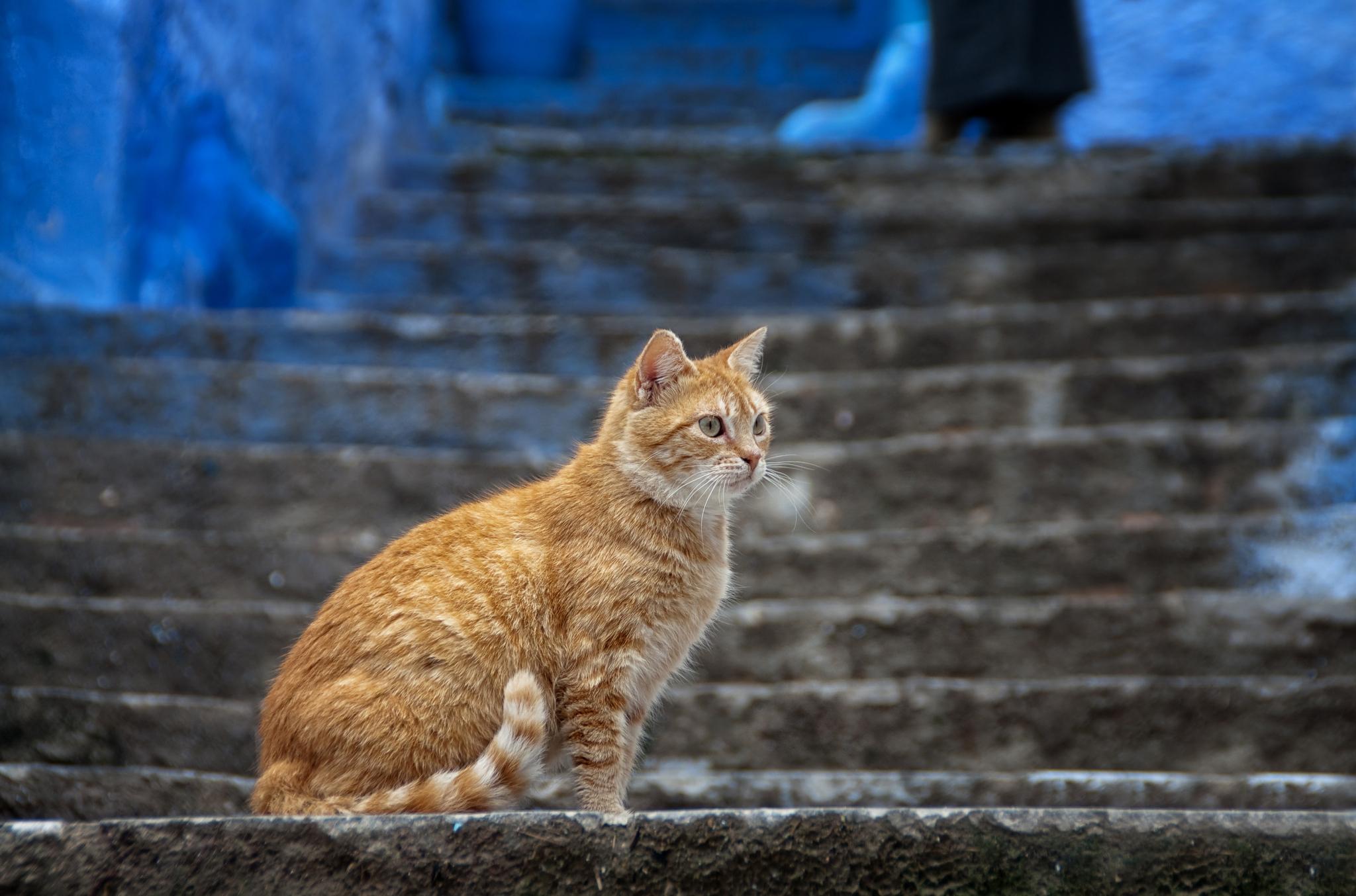 Рыжая на лестнице 7 фотография