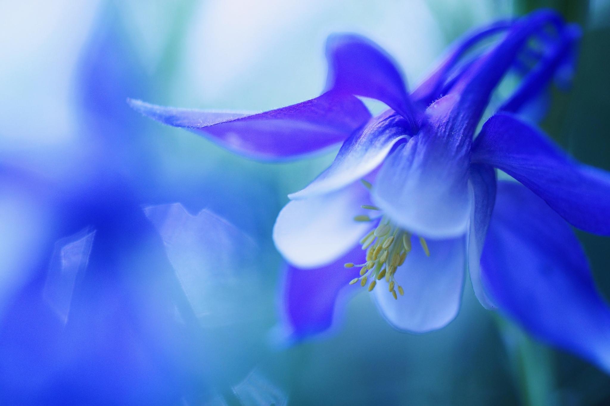 природа синие цветы nature blue flowers  № 1376482  скачать