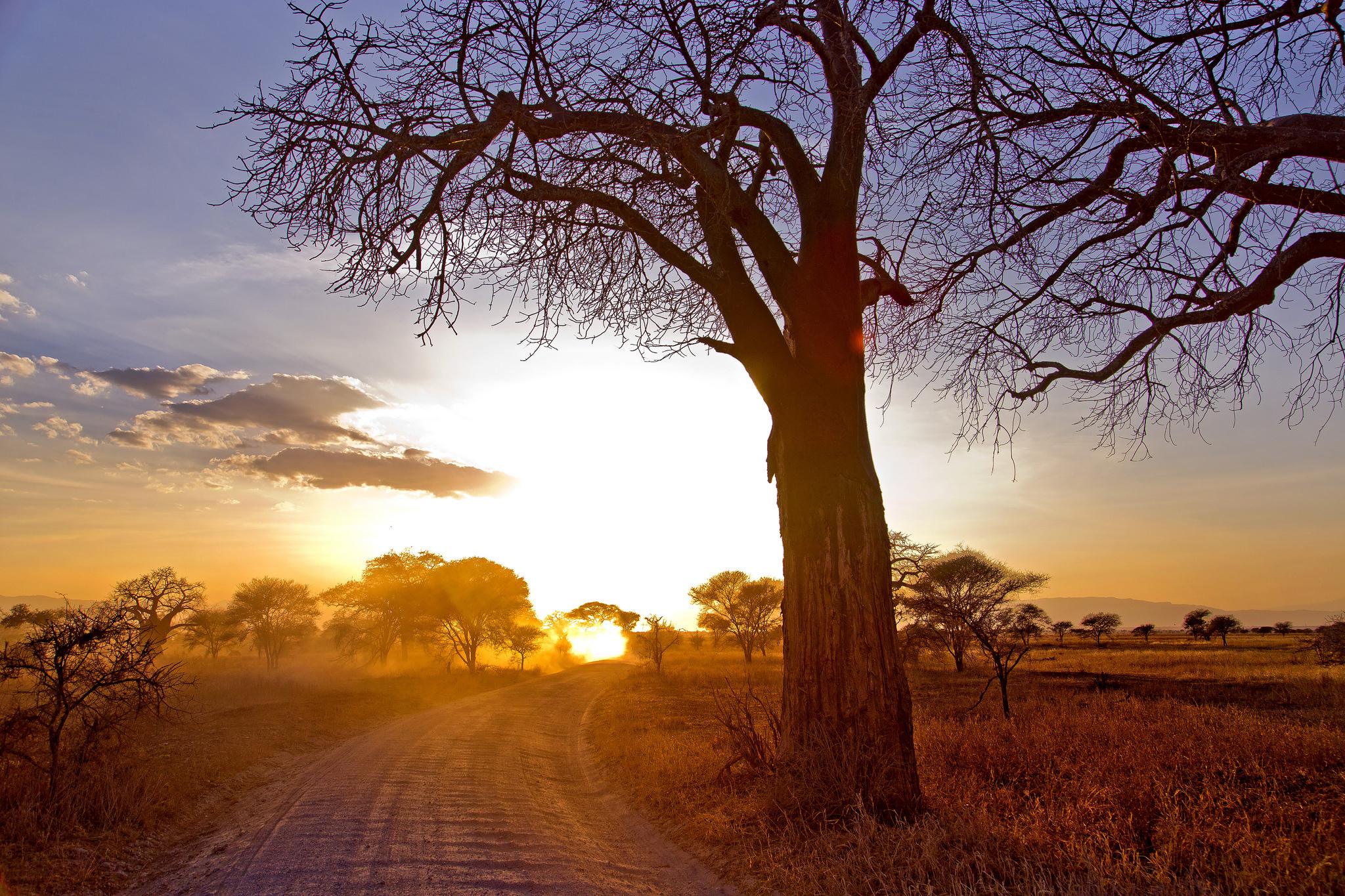 дерево дорога tree road  № 2404892  скачать