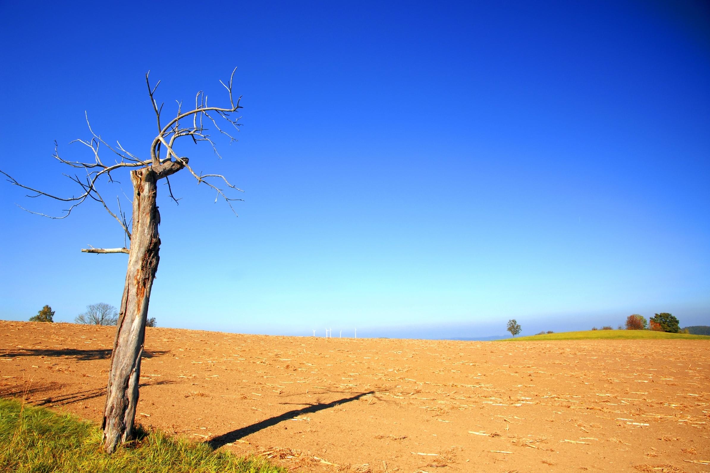природа деревья поле пустыня  № 3805796 без смс