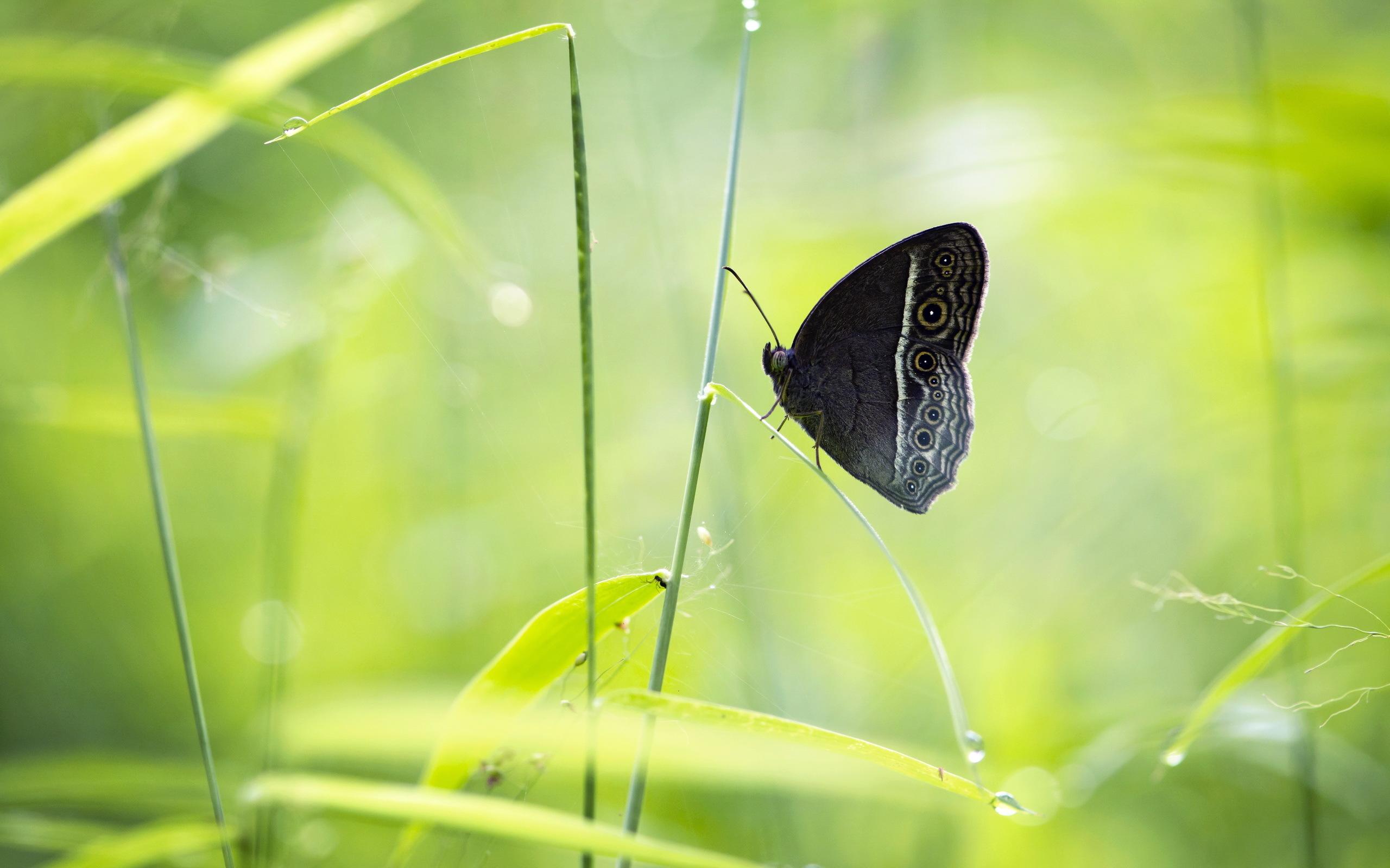 бабочка на зеленой траве  № 1396152  скачать