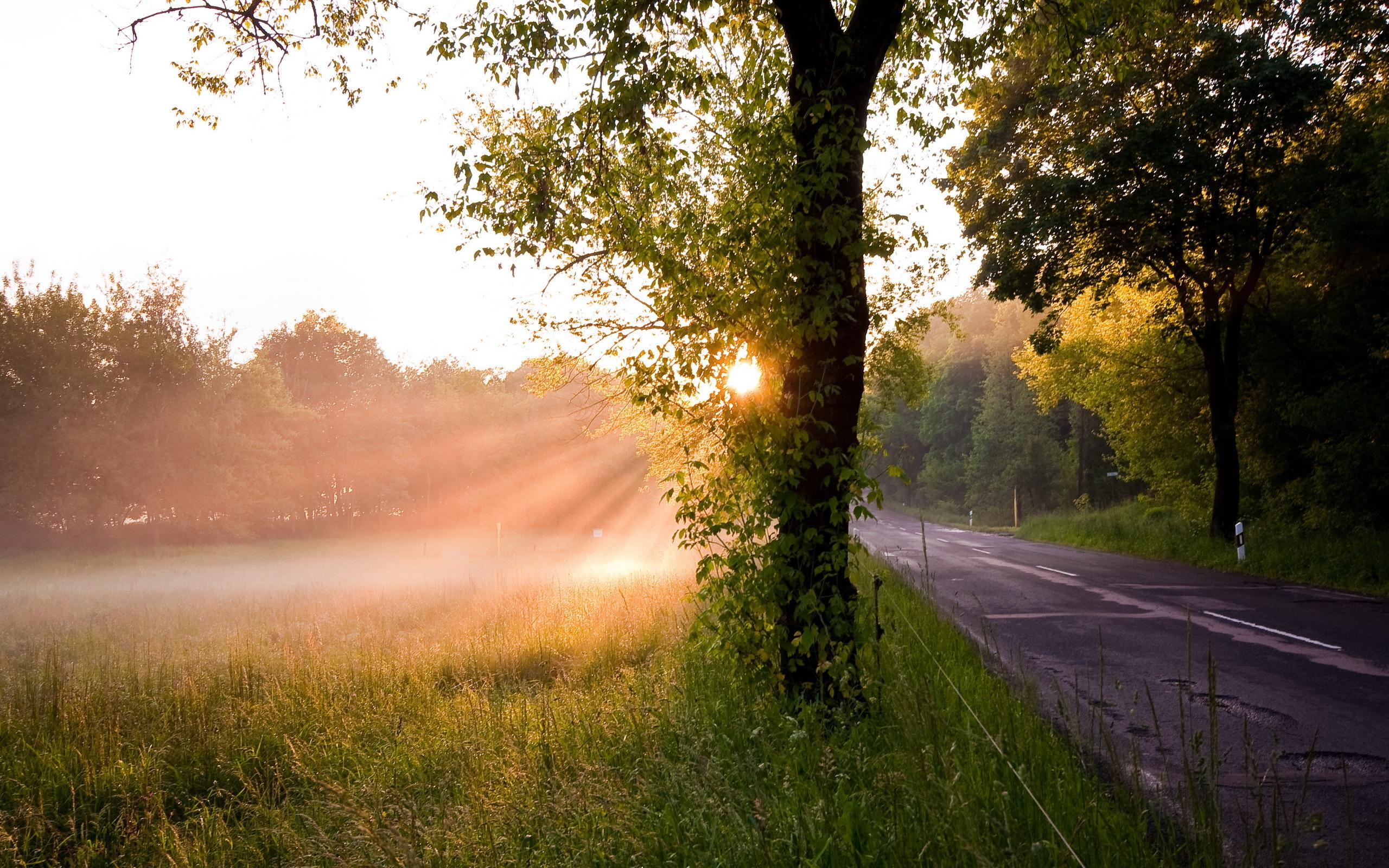 дорога, солнце, трава, деревья  № 3117705  скачать