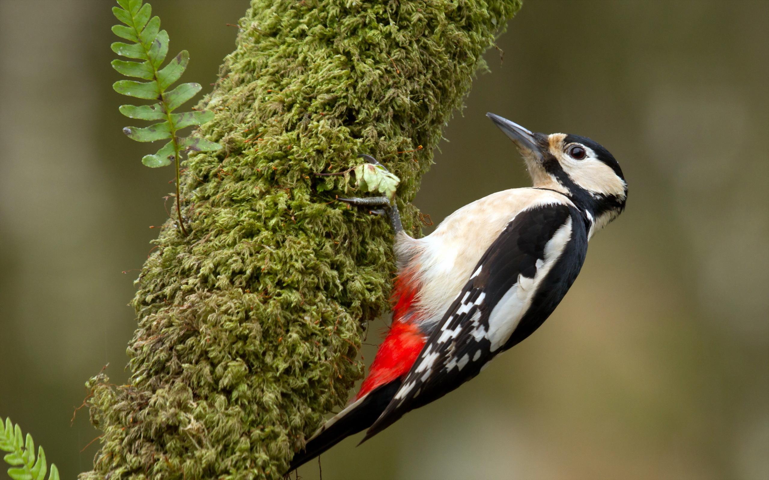 Фото птиц в отличном качестве