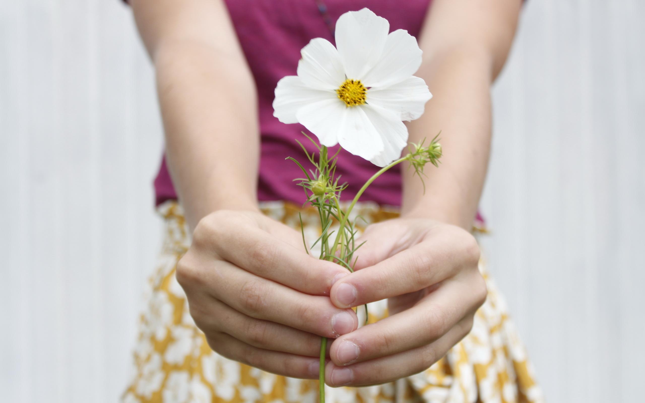 выполнен фоне фото женская рука с цветами дарударе дарим