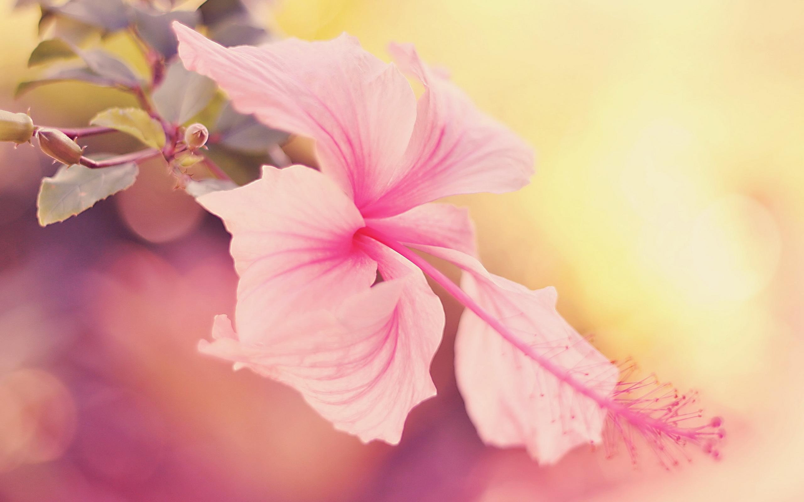 цветы макро розовые  № 1347189  скачать
