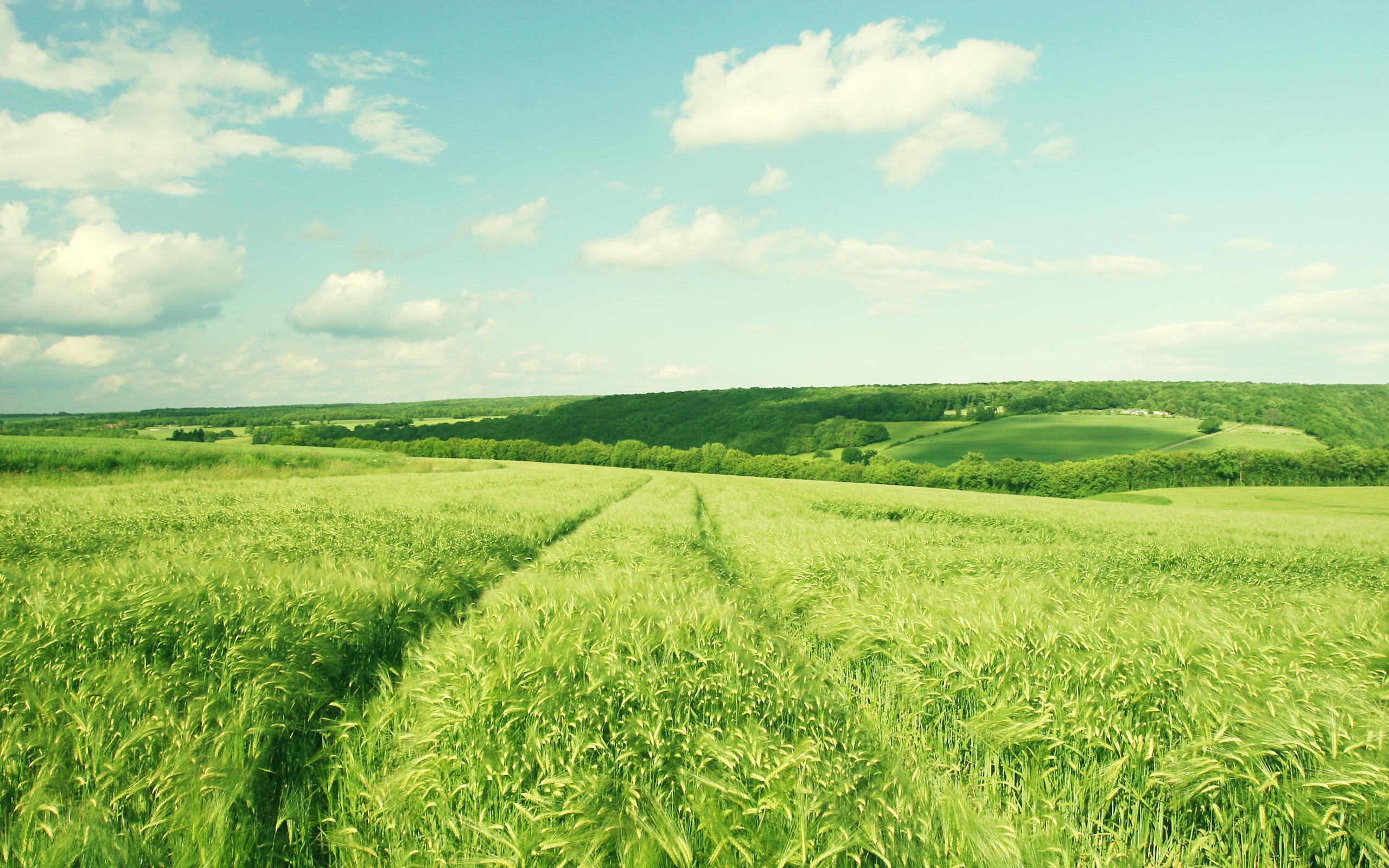 Дорога через зеленое поле  № 2604482 загрузить