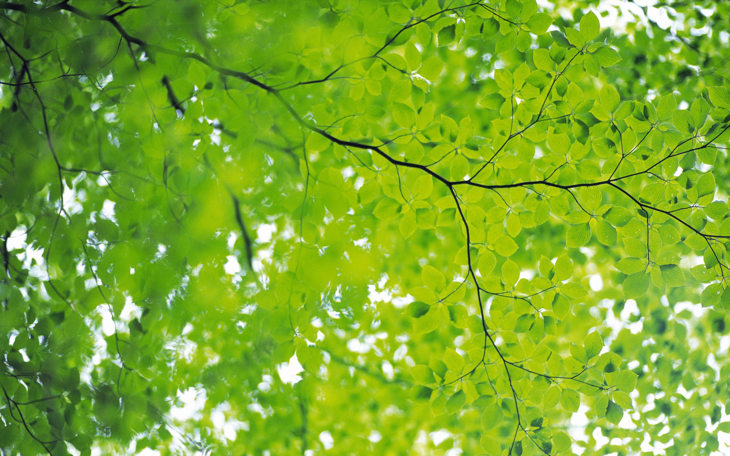 лес зелень ветви  № 2801137  скачать