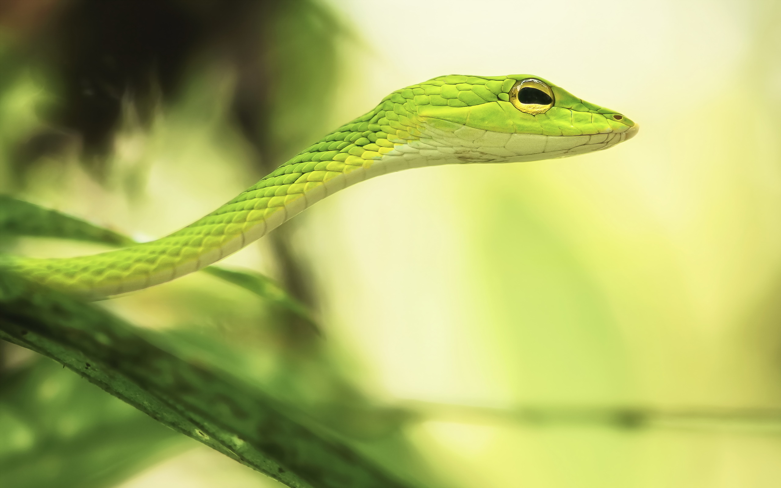 Green Snake Dream When a green snake shows up in a dream it typically symbolizes the resurgence of the dreamers connection with oneself The meanings associated