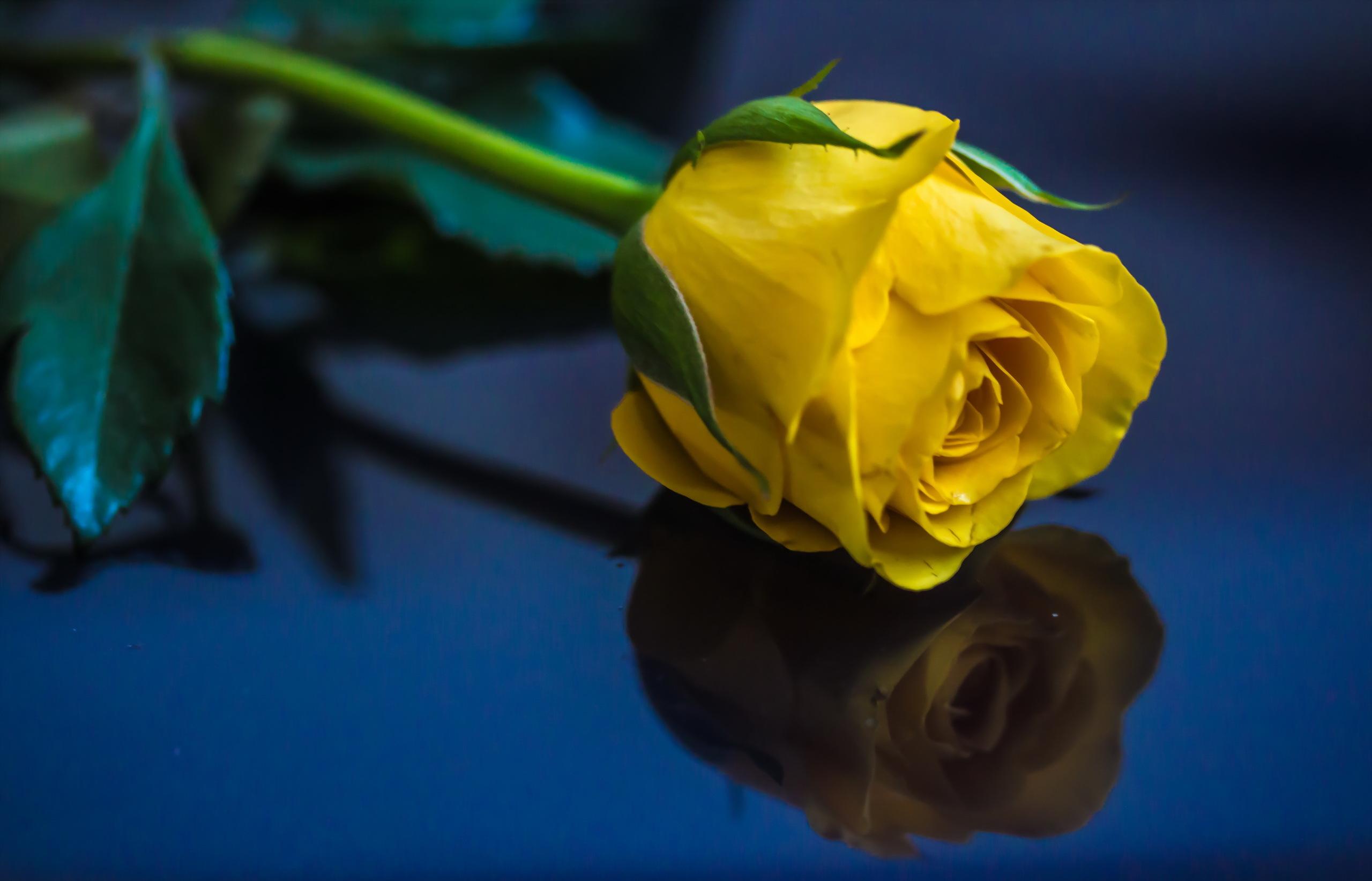 Картинки цветы прощения