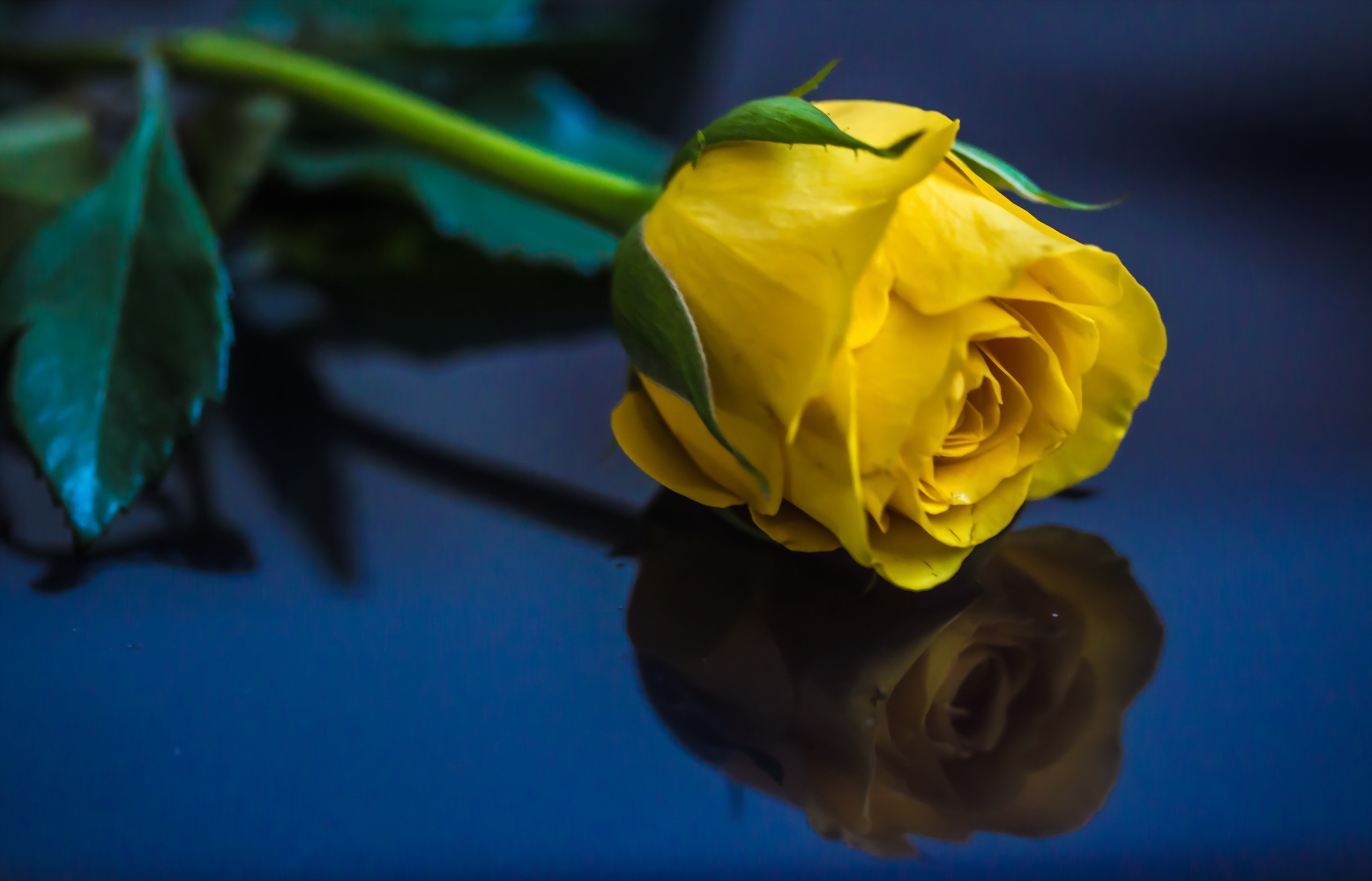 Картинка роза прости