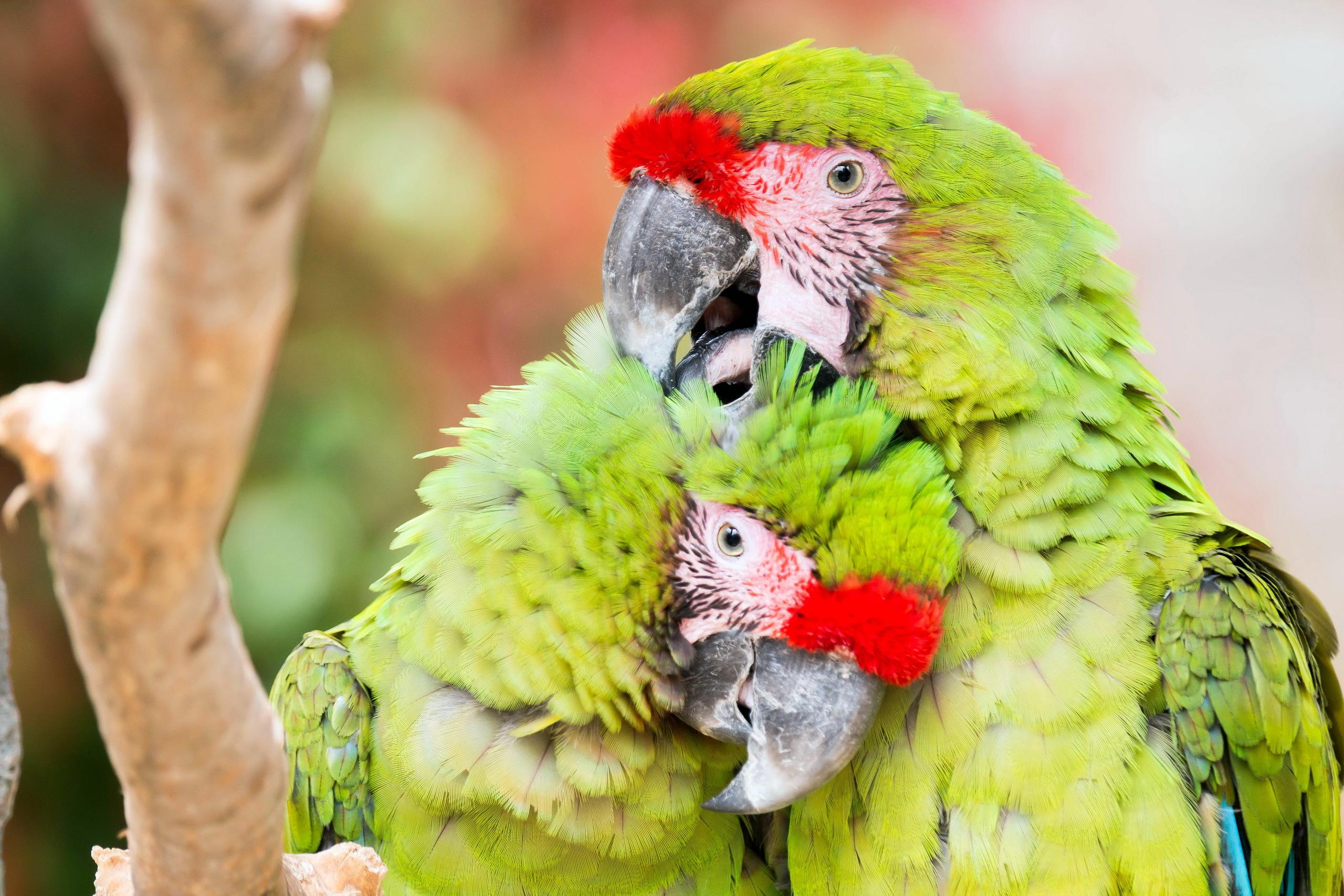 природа животные птицы попугаи  № 103618 без смс