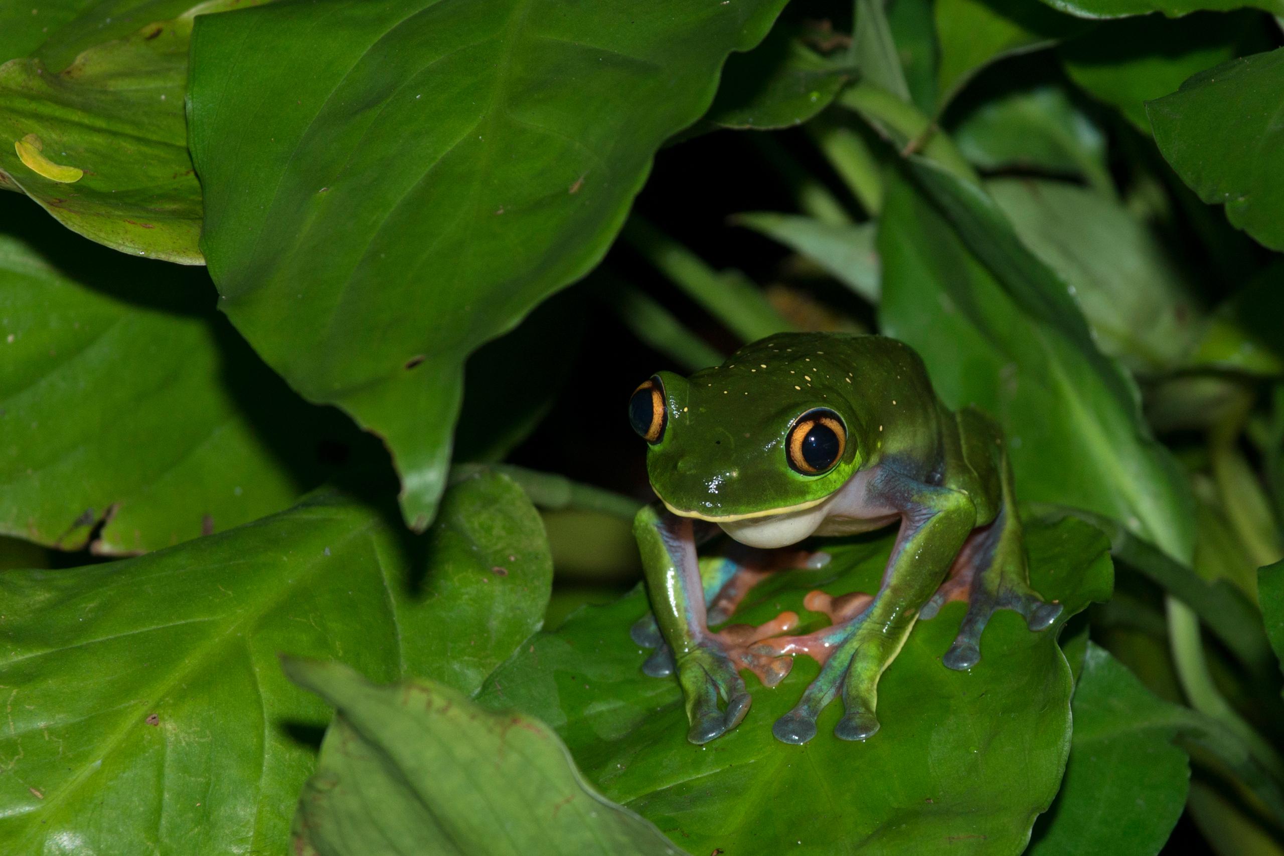 жаба лист фон  № 3164676 бесплатно
