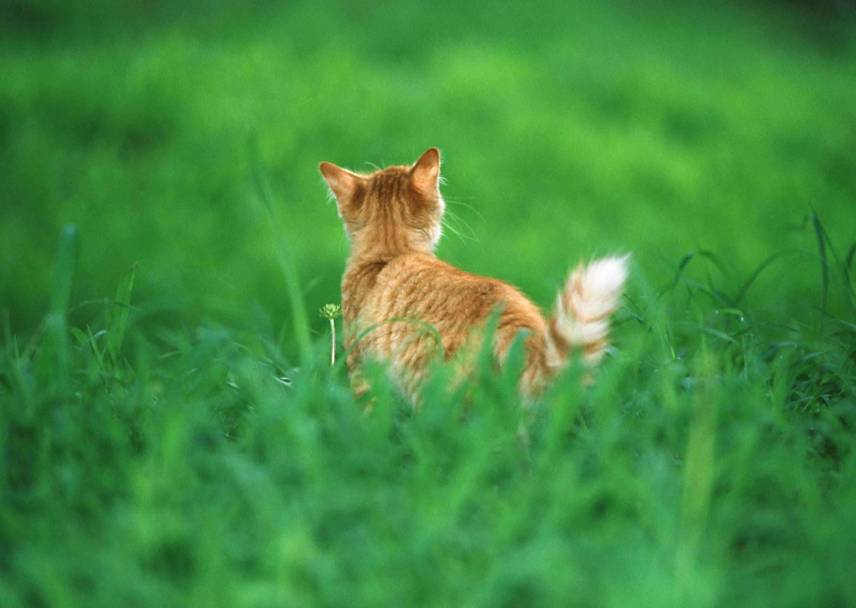 Котенок на траве  № 2959665 без смс
