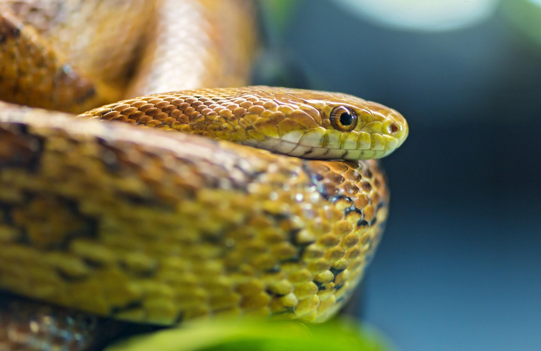 snake - HD2560×1600