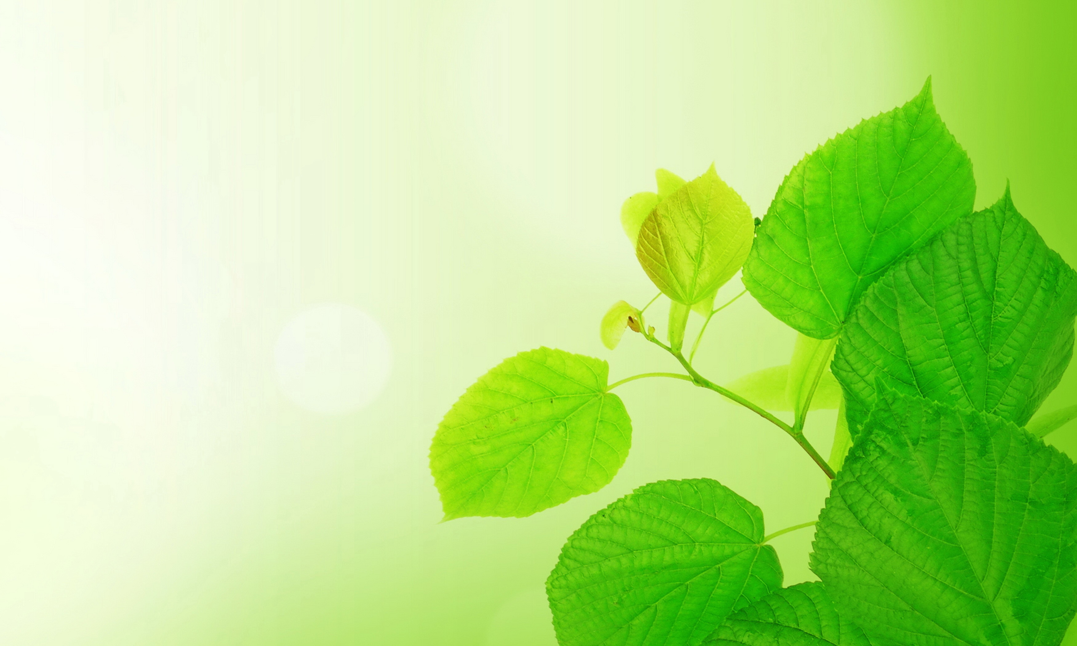 листья ветка фон  № 3219040 без смс