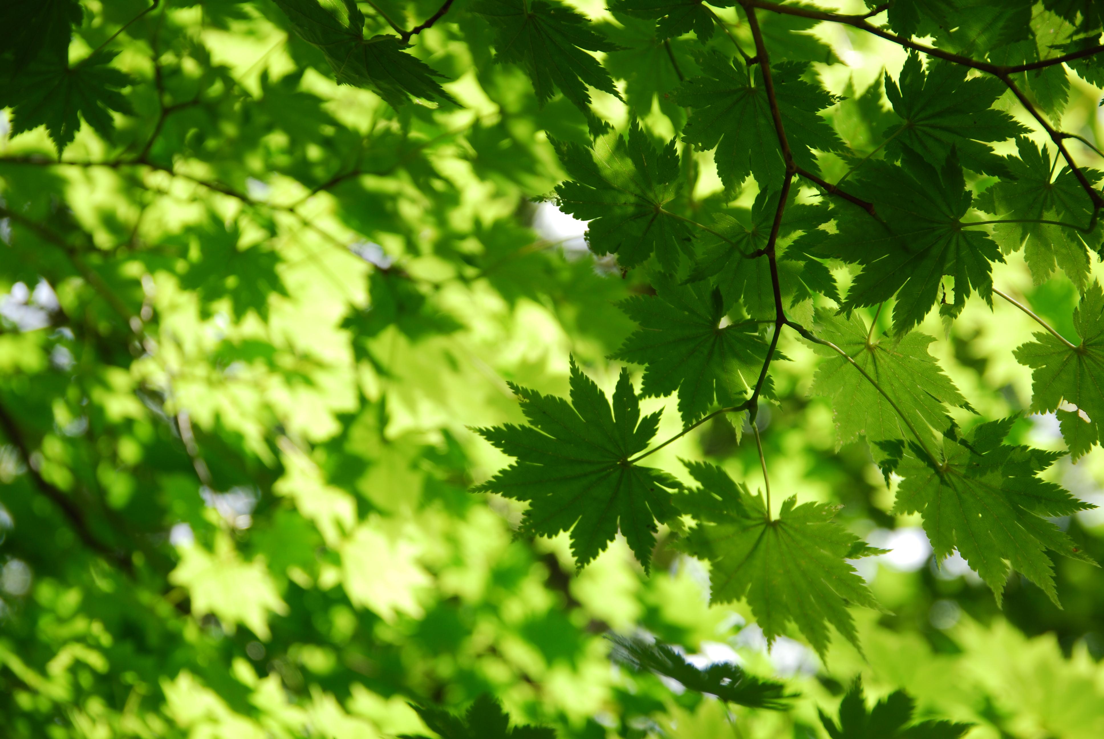 природа листья весна  № 3899936 бесплатно