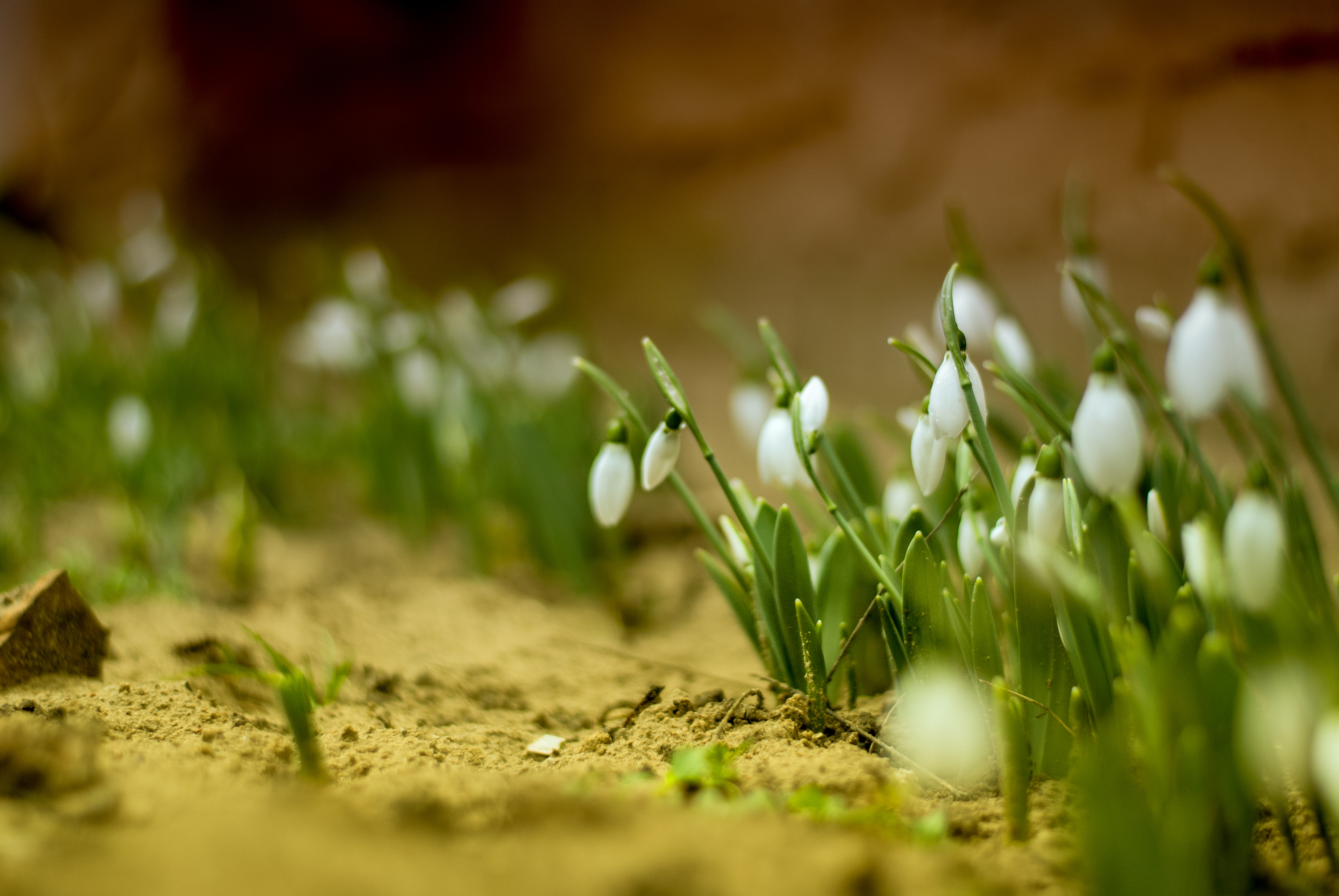 early spring images - HD1600×1071