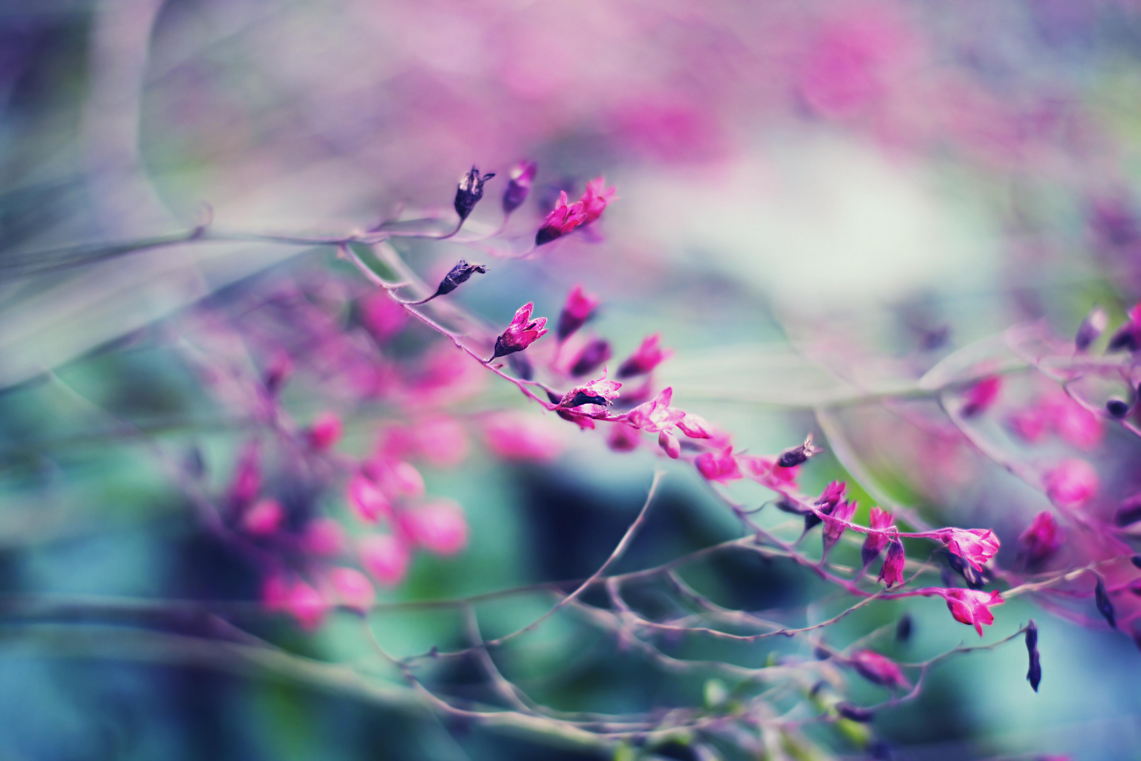 цветок, макро, розовый, природа, растения  № 695897 бесплатно