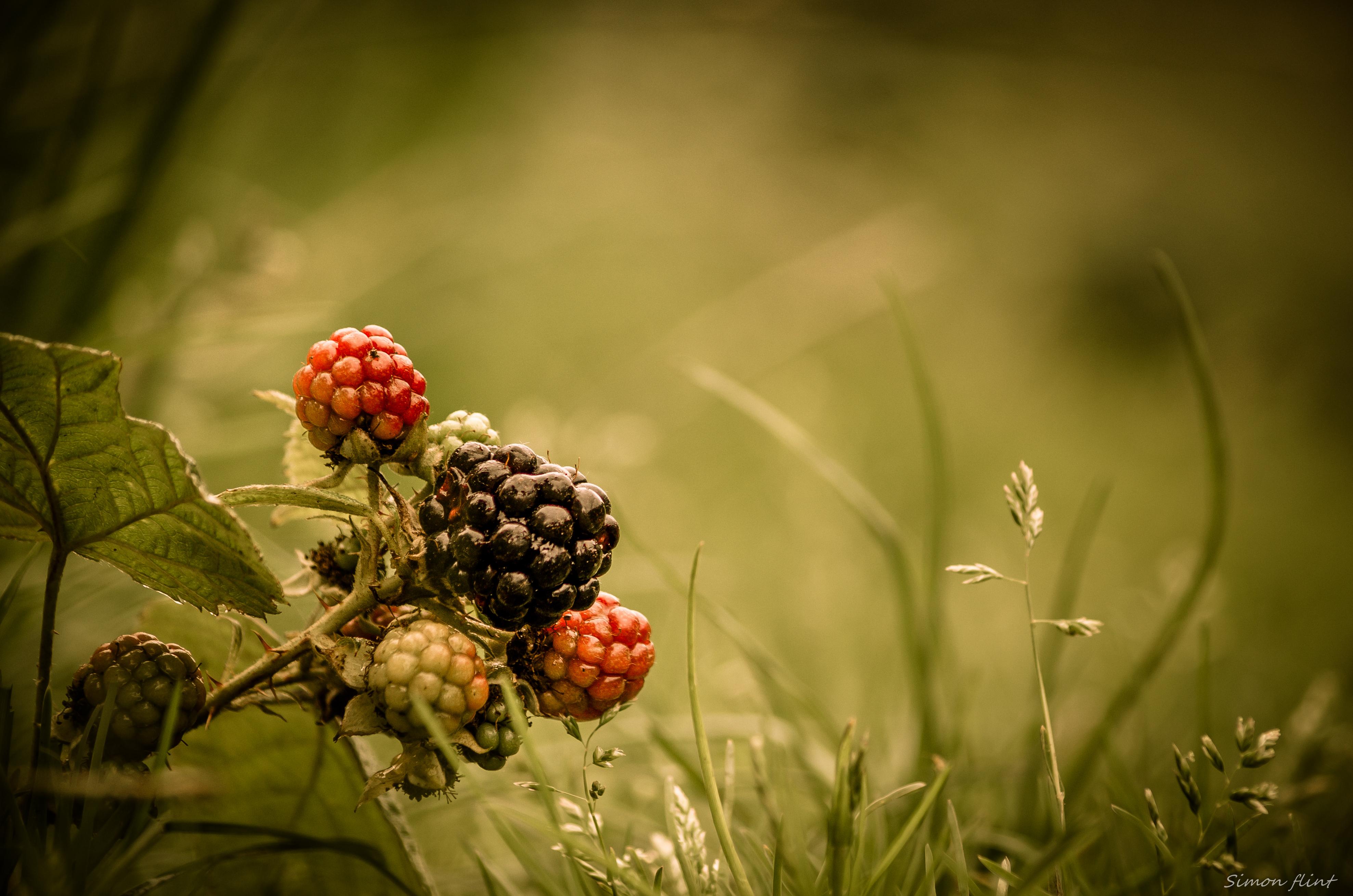 Лесные ягоды  № 2169714 без смс