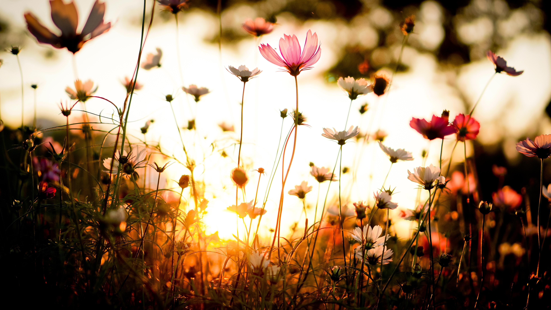 закат небо полевые растения  № 963481 бесплатно