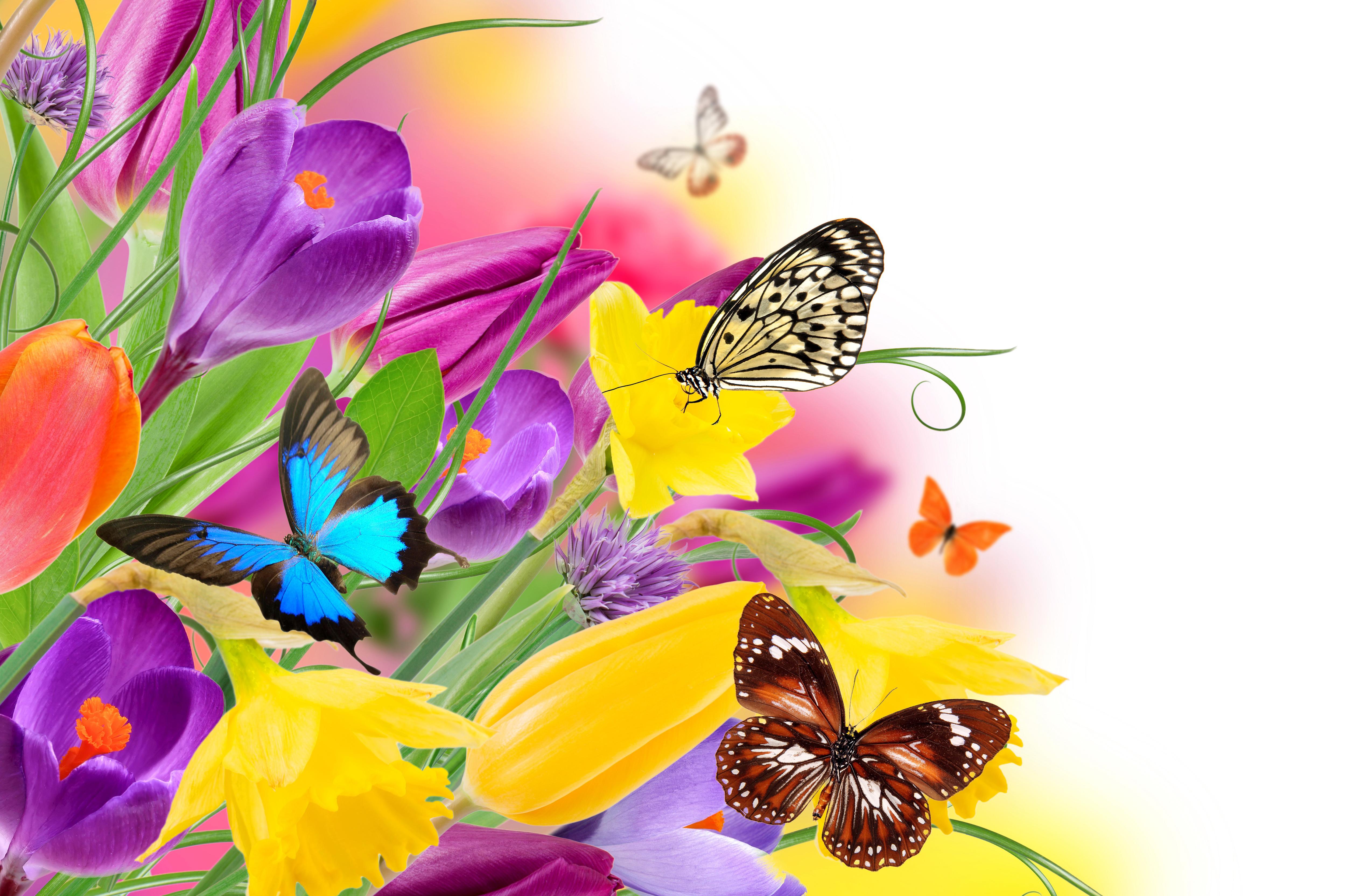 Обои Коллаж, крылья, цветы. Разное foto 15