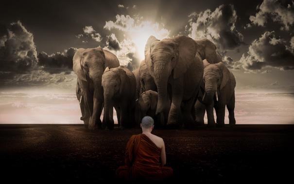 Фото обои cielo, budista, elefantes