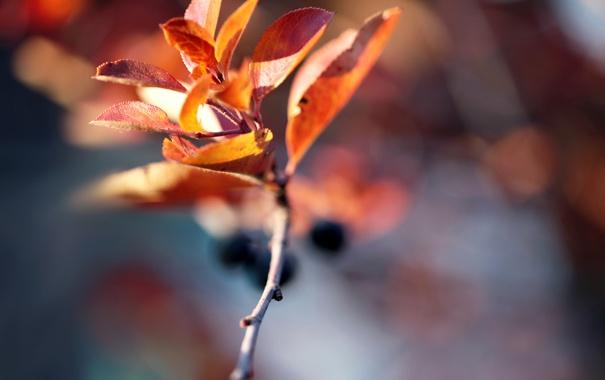 Фото обои осень, веточька, autumn blur