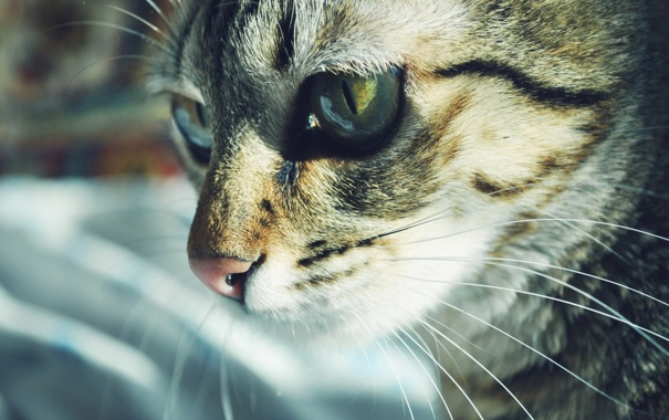 Фото обои животные, котик, снимок
