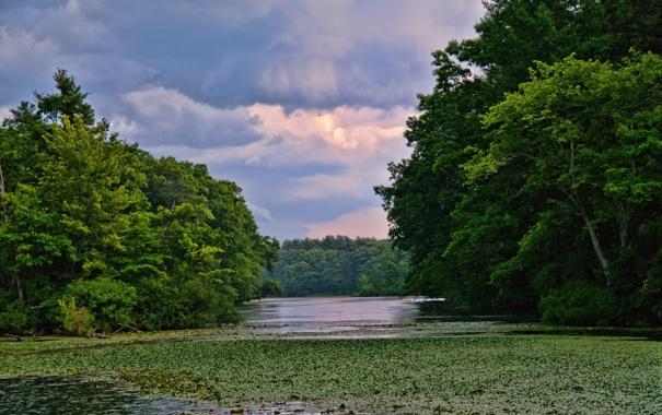 Фото обои лето, трава, деревья, река, кувшинки, заводь