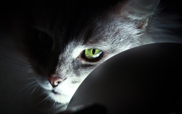 Фото обои глаза, кот, взгляд, зеленые, cat, авторская