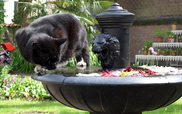 Фото обои морда, кошак, фонтан, котяра