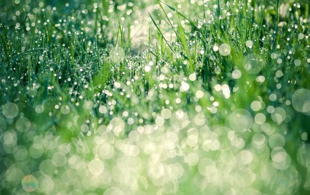Фото обои зелень, трава, листья, вода, капли, природа, роса