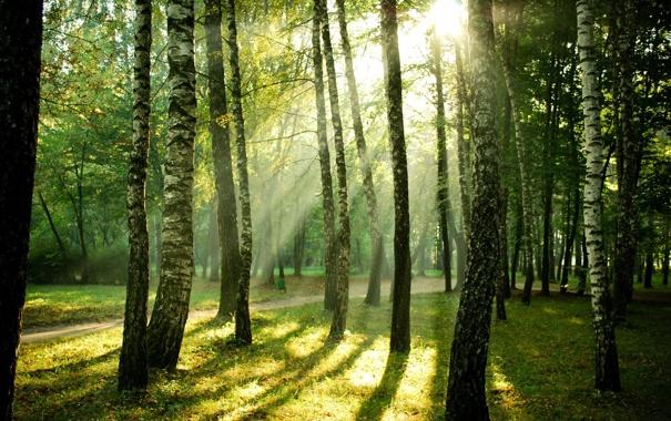 Фото обои свет, деревья, природа, парк, дорожка