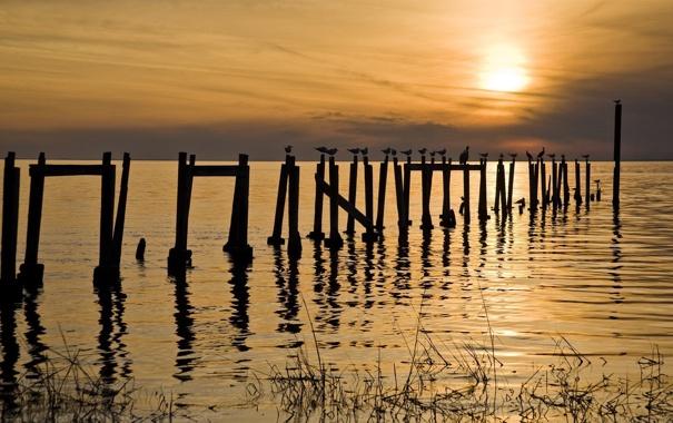 Фото обои море, закат, птицы