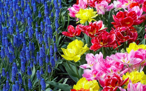 Фото обои цветы, яркие, клумба