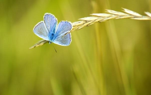Фото обои зелень, лето, желтый, природа, фон, обои, бабочка