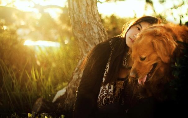Фото обои девушка, свет, настроение, собака